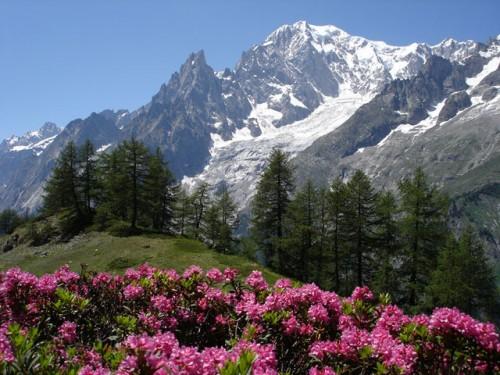 Alpi. futuro quotidiano
