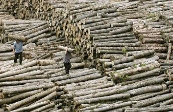 legno illegale