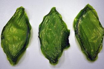 Silk-Leaf- Project