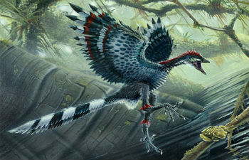 archaeopteryx primo uccello
