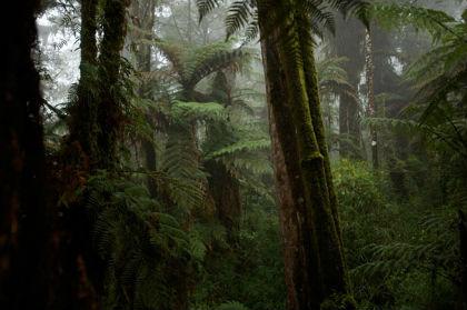 monti Foja, Nuova Guinea