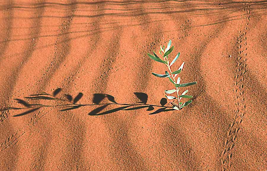 Nel Deserto Acqua Nel Deserto Tutto