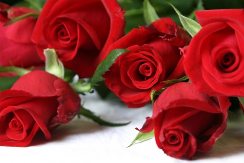 rose-rosse-di-san-valentino