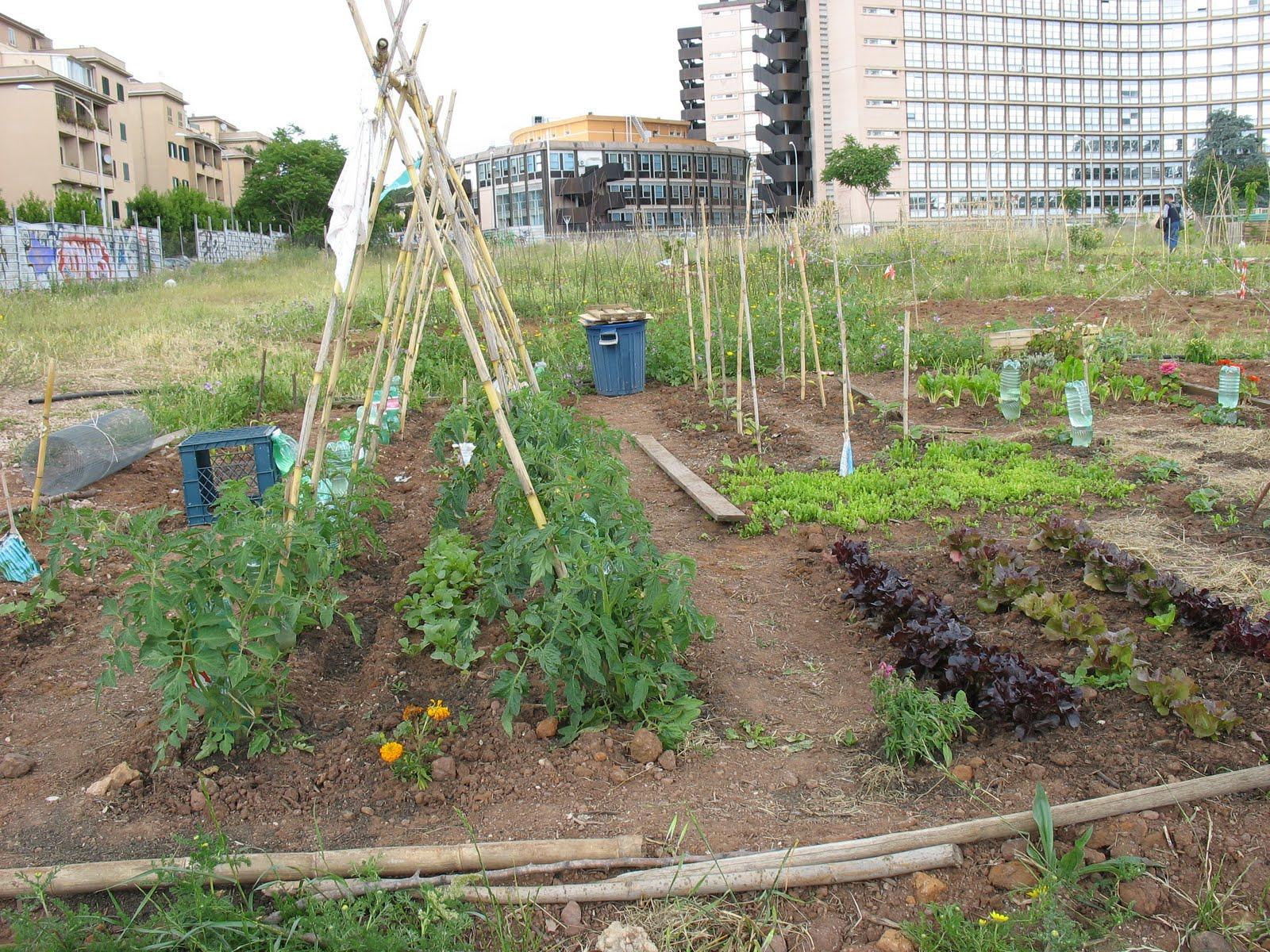 nella periferia di roma arrivano gli orti urbani cibi